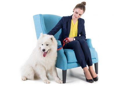 Conseils pour l'acquisitiond'un chien!