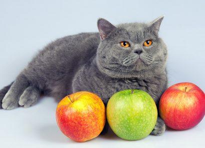 Comment choisir l'alimentation de mon chat?