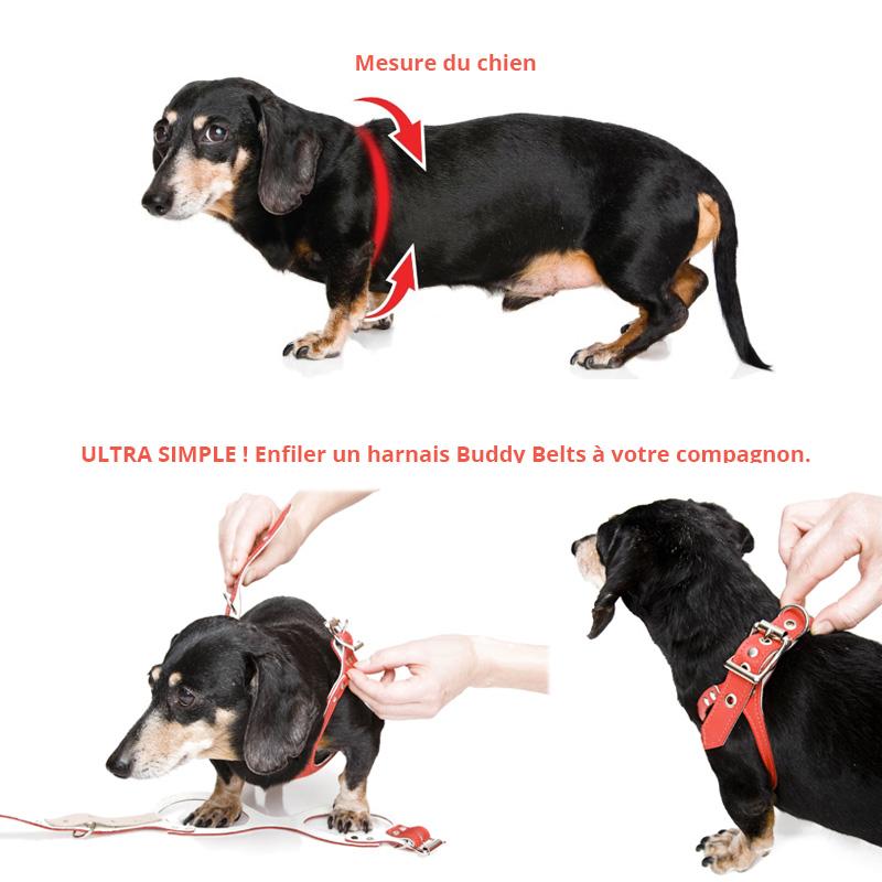 buddy-belt-2